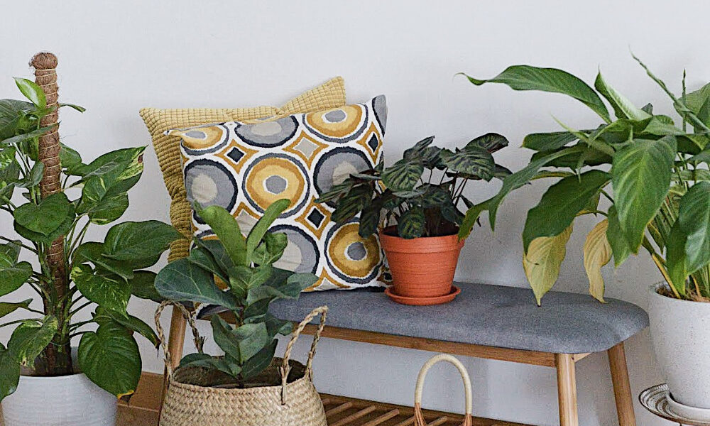 How To: 5 Ways To Decorate Your Home With Indoor Plants - That Isle Life